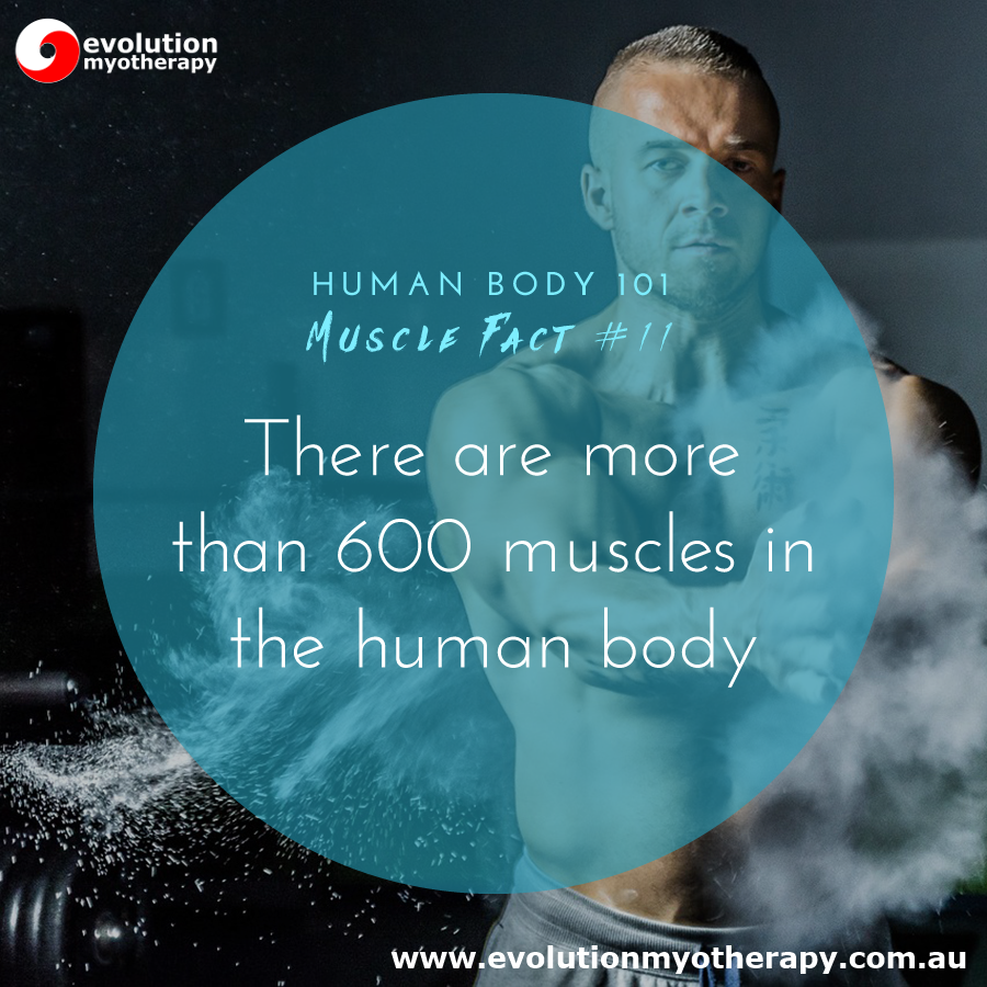 Human Body 101: Muscle Facts #11
