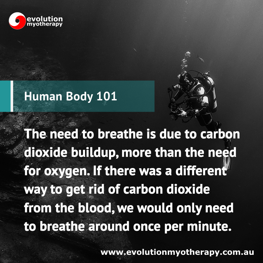 Human Body 101: Breathing