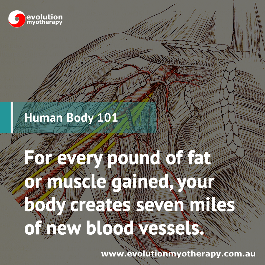 Human Body 101: Blood Vessel Development