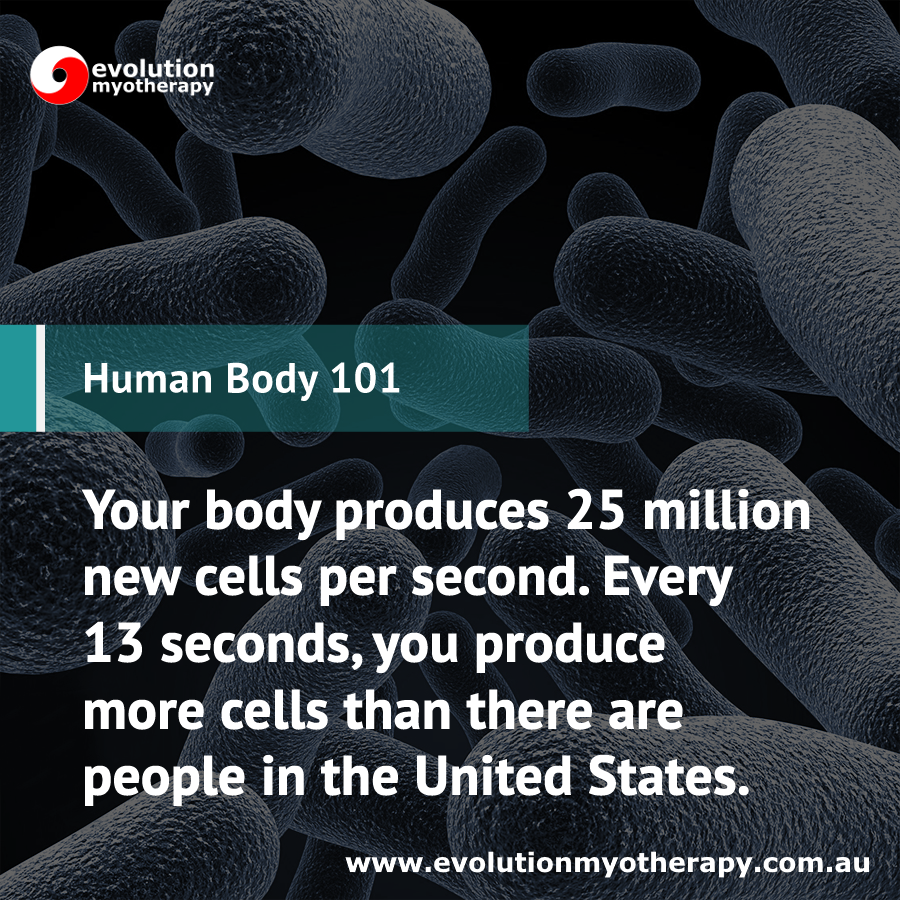 Human Body 101: Cells