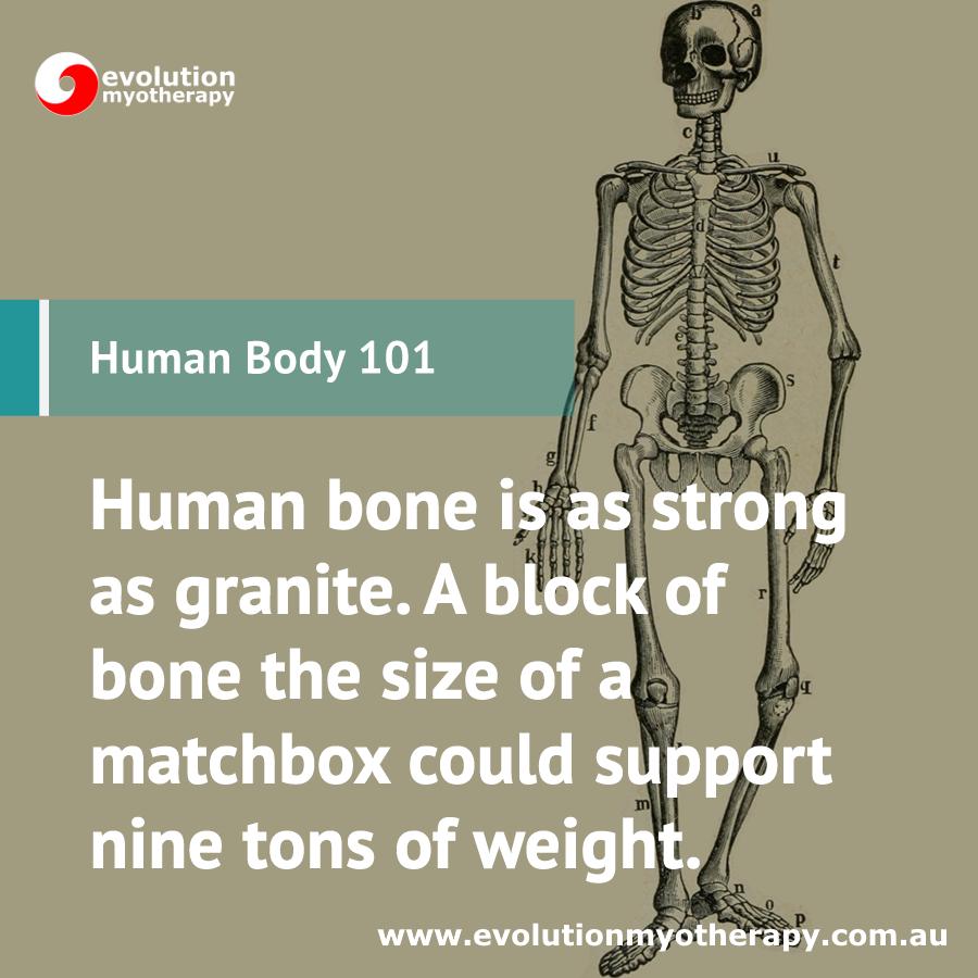 Human Body 101: Bones