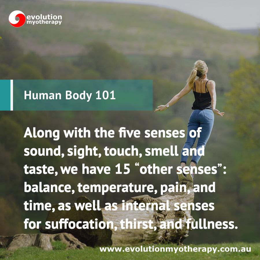 Human Body 101: Senses