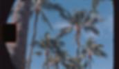 MelinaC-still1 copy.png