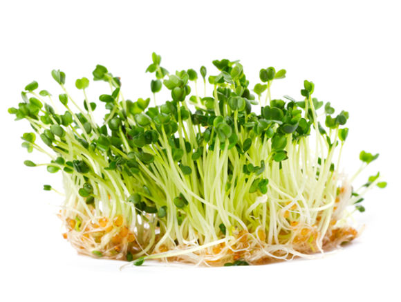Chemical In Broccoli Sprouts May Treat >> A Panacea The Benefits Of Broccoli Sprouts And Sulforaphane
