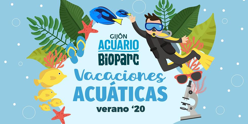 Vacaciones Acuáticas (campamento verano)