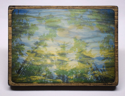 """""""Pine Reflections"""""""