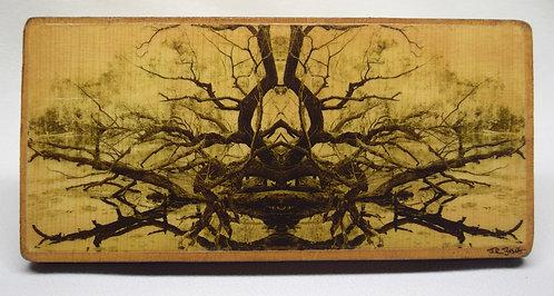 """Siamese Tree"" (Reverse Negative)"