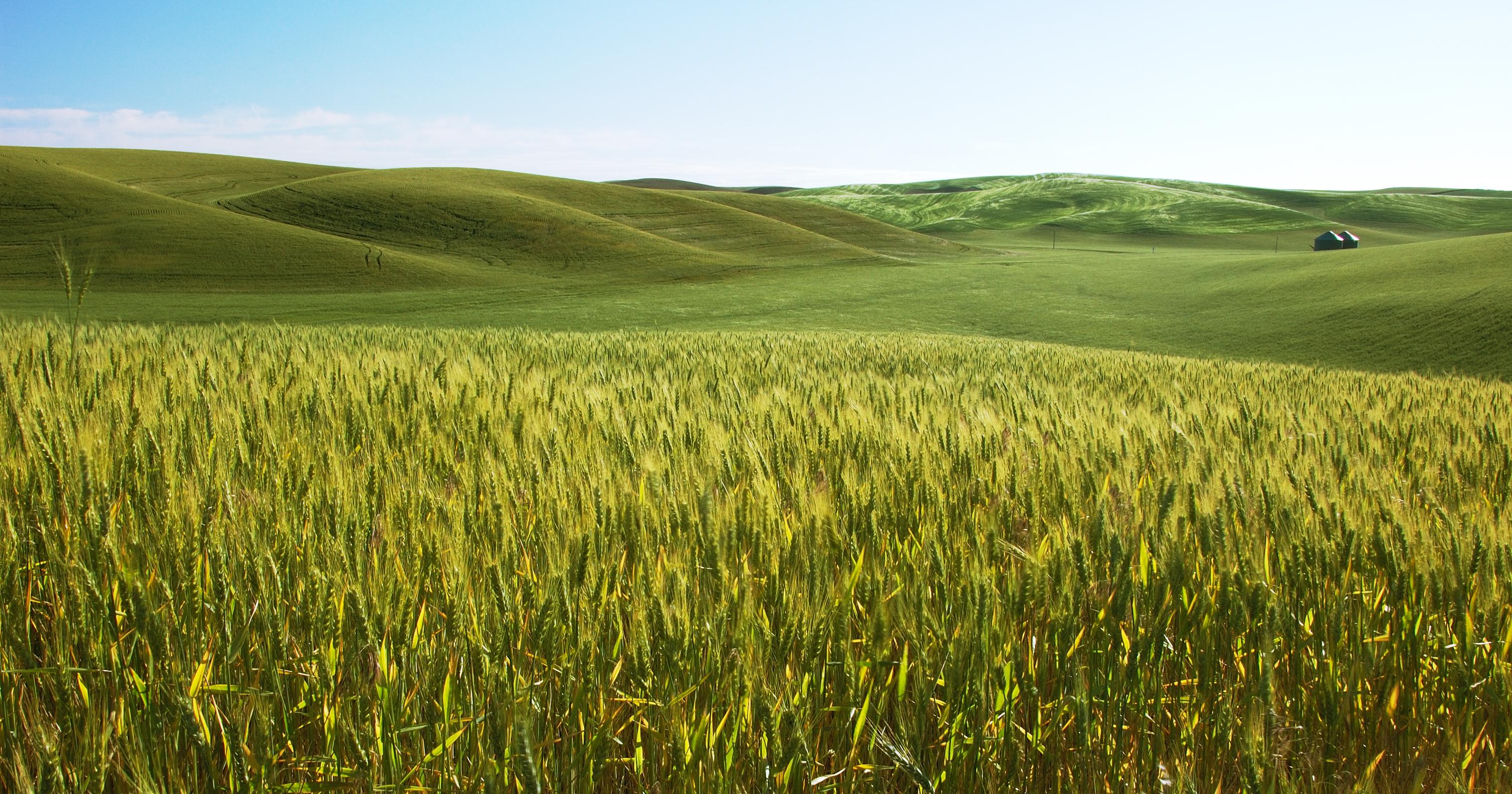 Zpracování bioodpadů a biomasy