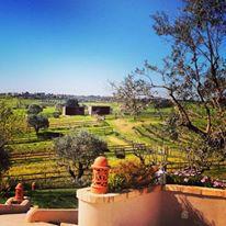 vigne, huile, olive, tourisme, portugal