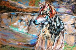 Sunset Wolf