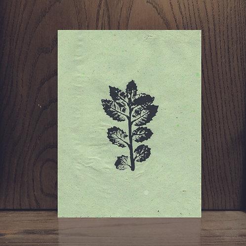 Impression Végétale - Chêne de Californie