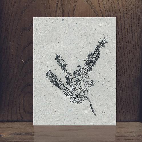Impression végétale - Bruyère