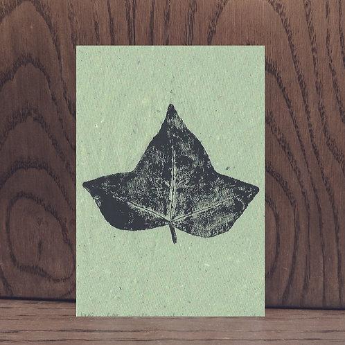 Impression végétale - Lierre