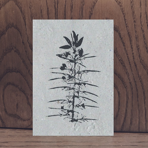 Impression végétale - Ulex Ajonc