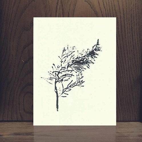 Impression végétale - Cyprès