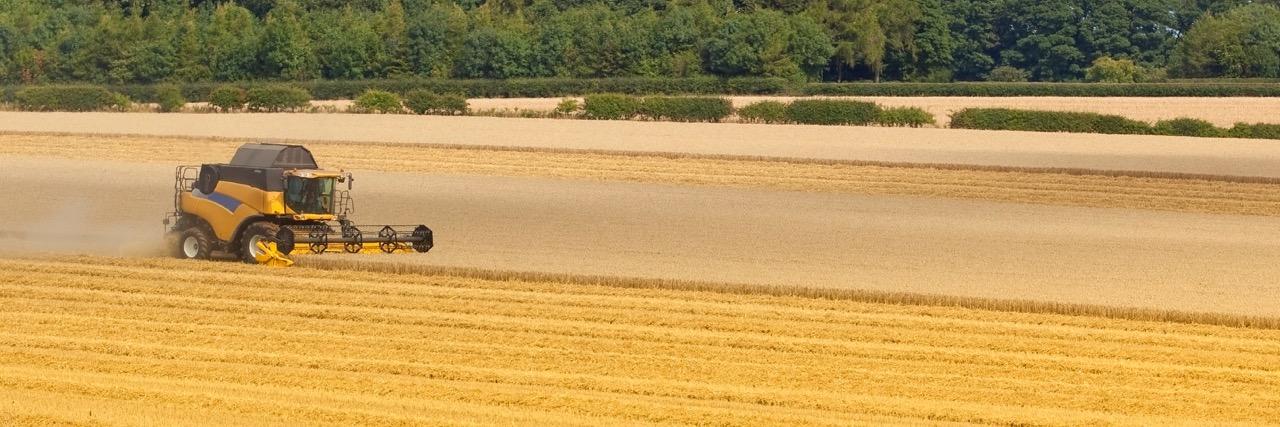 Soil Bank Harvest
