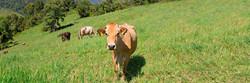 Soil Bank Regenerative Farming