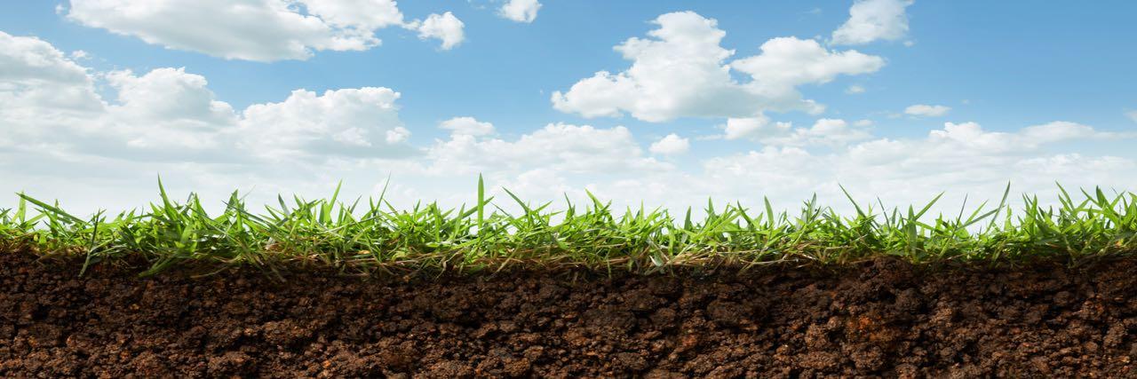 Soil Bank Soil Profile