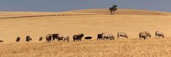 Soil Bank Beef Cattle