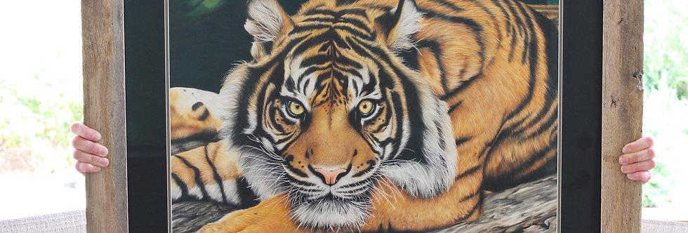 Remember Me - Tiger