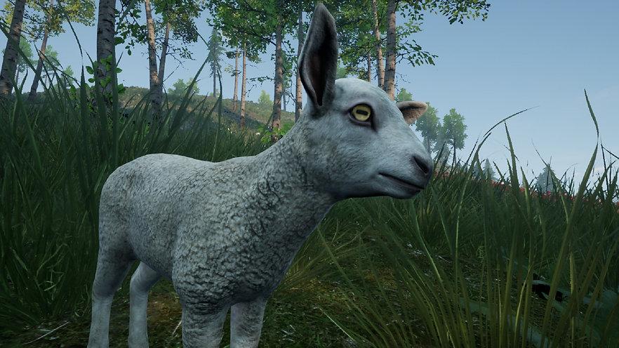 Sheepie 01.jpg