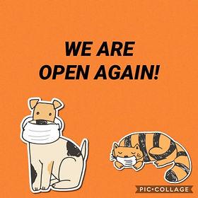 were open.jpeg