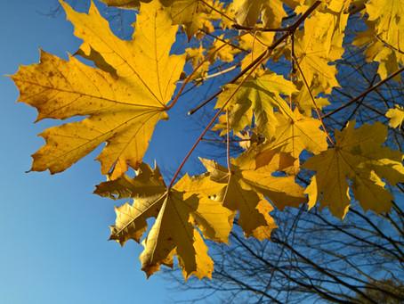 Herbst ... meine Momente