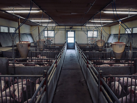 Naturens cyklus er ikke at avle dyr ind i betonhaller, for bare at slå dem ihjel