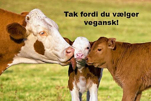 Veganisme, vegansk, livsfilosofi, filosofi, vegan science, vegansk videnskab, dyr, dyrs bevidsthed, dyrerettigheder, dyrevelfærd, landbrug, miljø, klima, bæredygtighed, plantemad, vegansk mad, vegansk livsstil, aktivisme, blog, foredrag, for børn