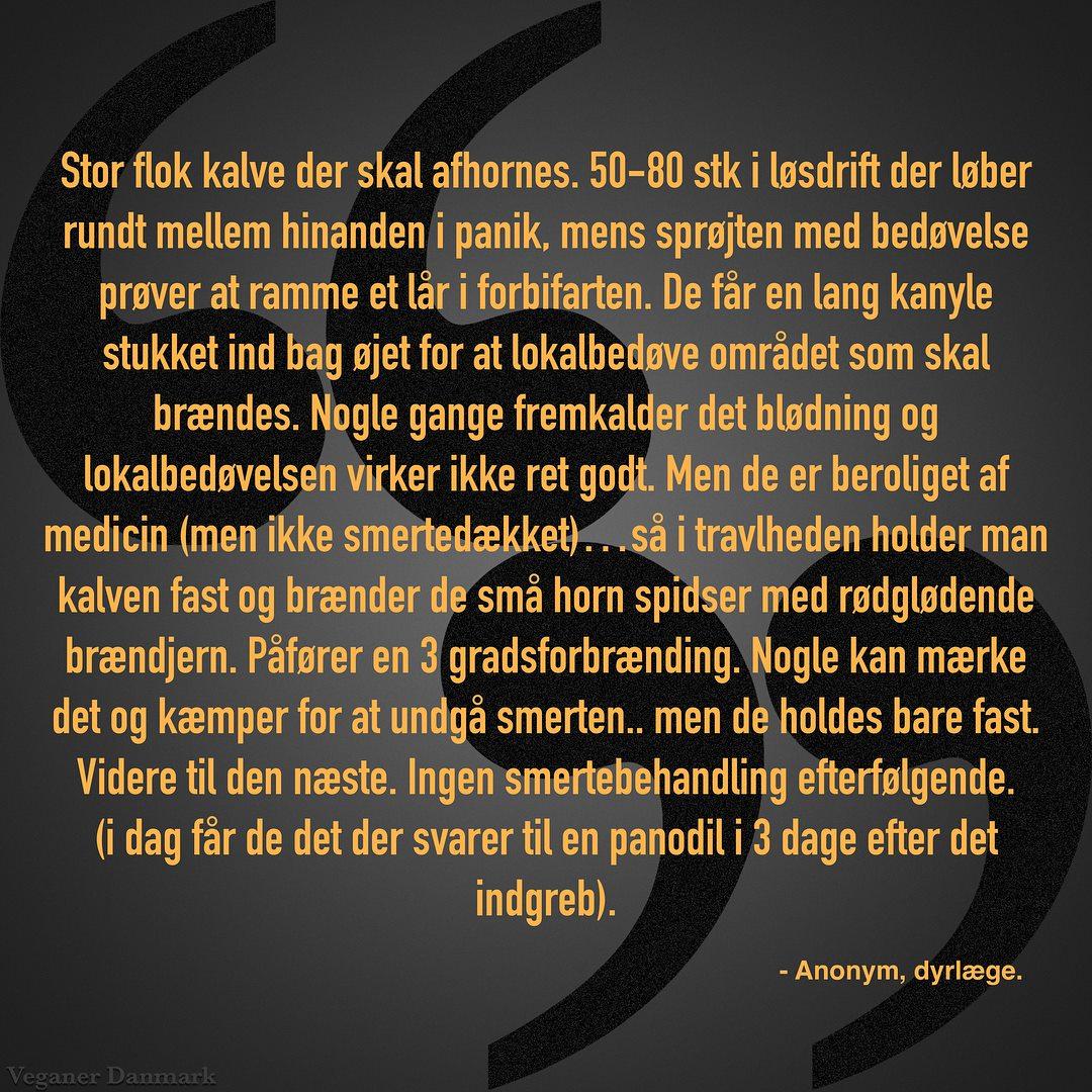 dansk landbrug, vegansk, veganisme, dyr, gris, ko, høns, kalv, kylling, danmark