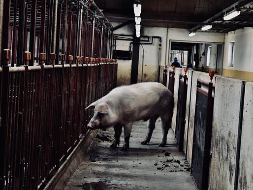 Vi vil ikke forsvare økologisk dyrehold