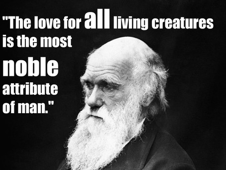 Universel medfølelse må være vores endelige mål