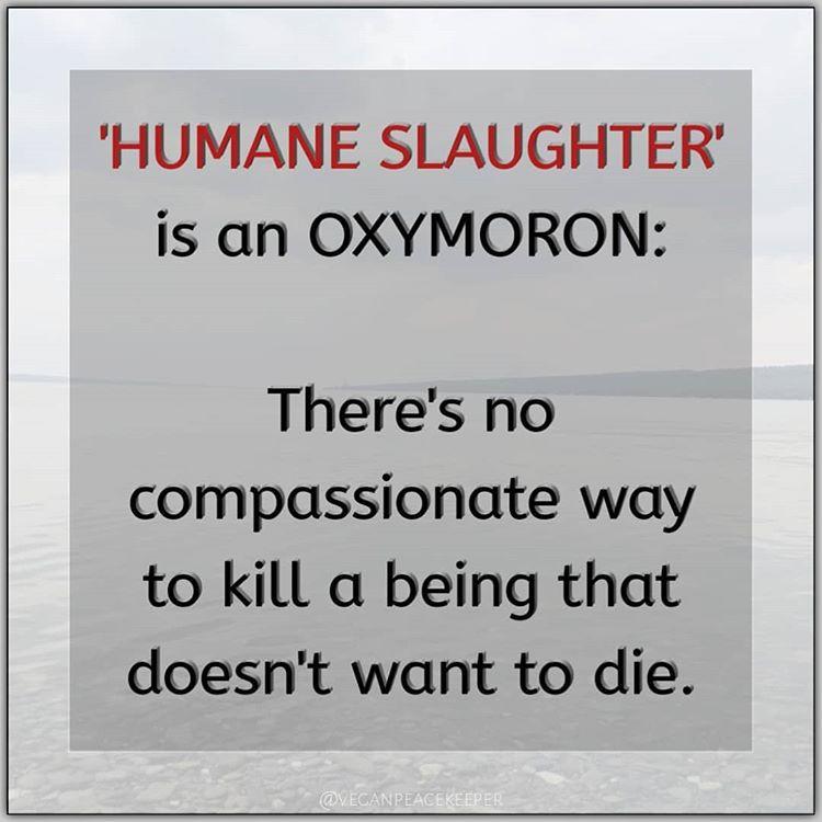 veganisme, oxymoron, human slagtning, slagter, vegansk, veganer, slagteri, etik