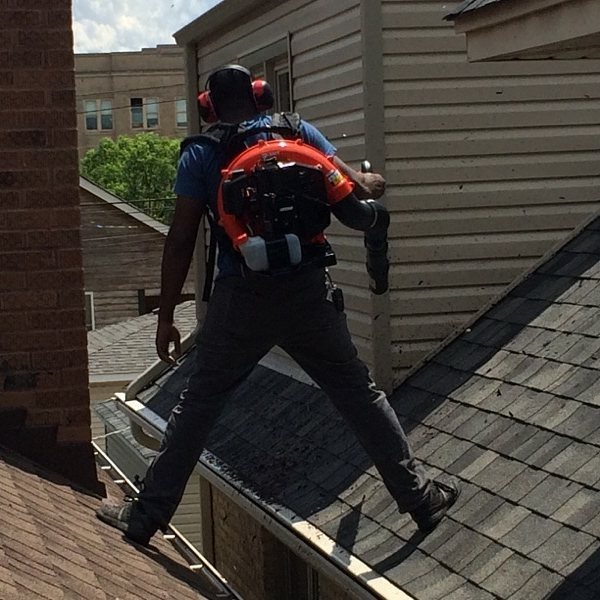 Straddling 2 houses__#guttercleaning #ch