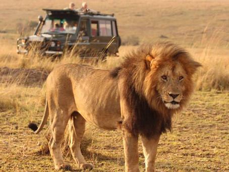 GO On An Adventure - Big Cat Safaris to Kenya