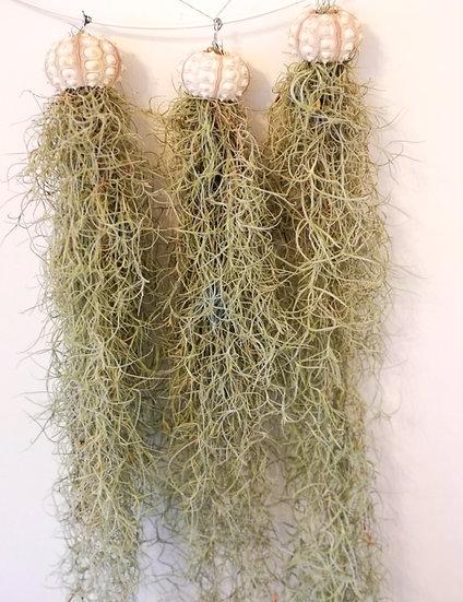 Air Gardens - Jellyfish Hanging Sea Urchin with Spanish Moss