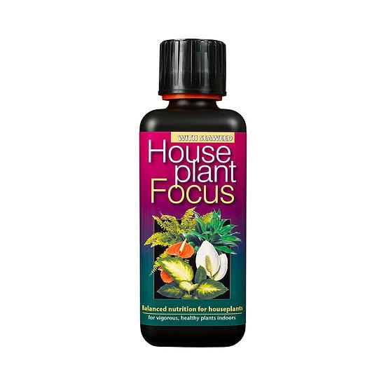 House Plant Focus Food
