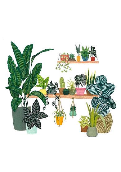 Lara Oztekin - Hanging House Plant Shelves