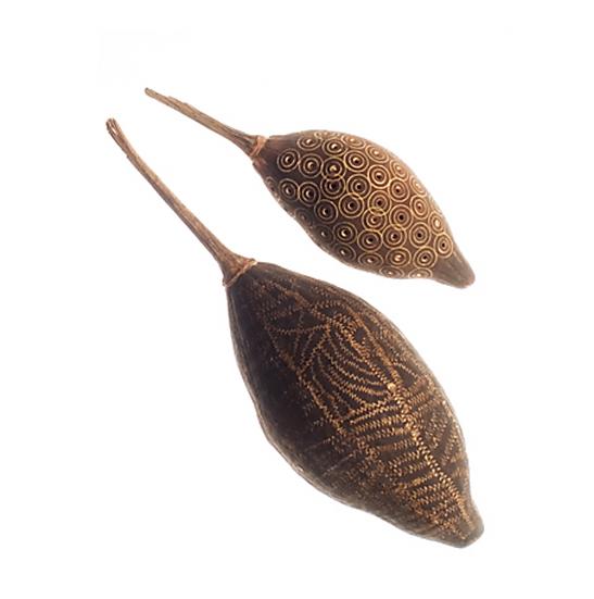 Baobab Tree Seed Decorative