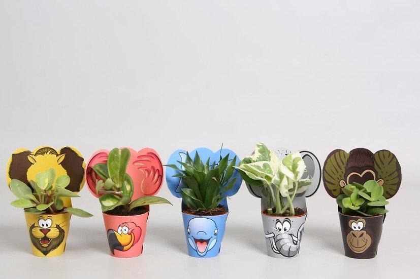 Foliage House Plant- Kids