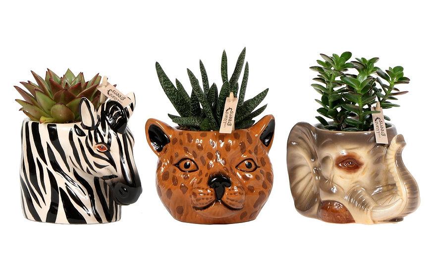 Succulent Ceramic Tree Twins