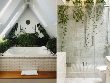 Bathroom & Kitchen Plants