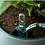 Thumbnail: Elho- Self watering inserts