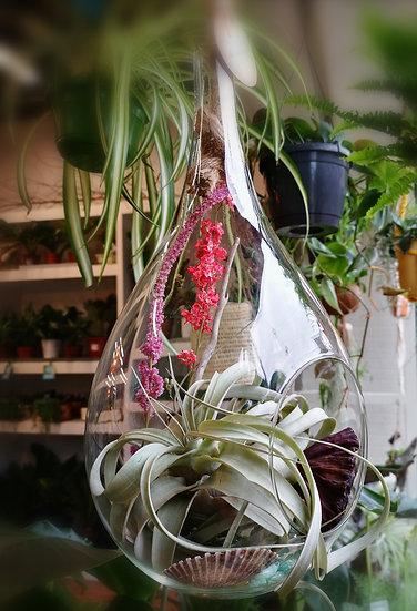 Air Gardens -Ultimate Teardrop Air Garden
