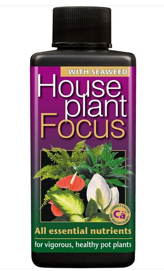 House Plant Focus 300ml