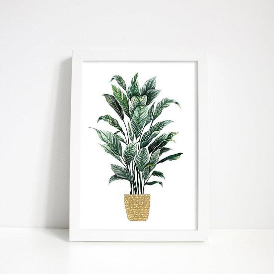 Lara Oztekin - Prayer Plant