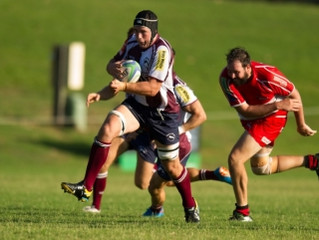 Noosa Dolphins Rugby heading