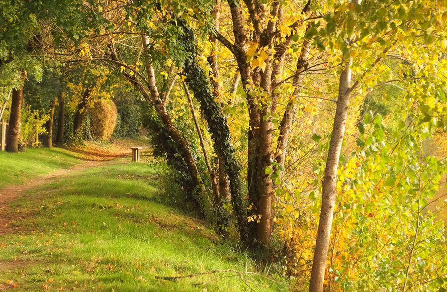 La scène d'automne 7