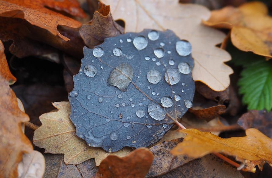 La scène d'automne 8
