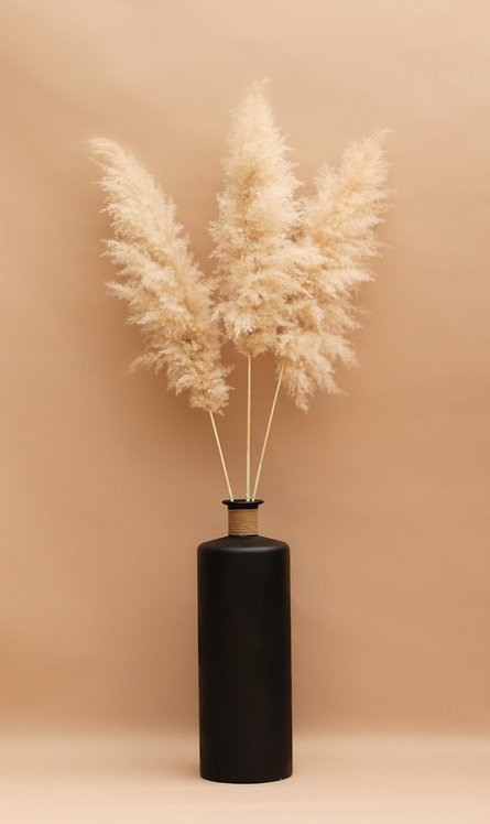 Extra Large 6ft. Tall Pampas Grass - Bundle of 3 - Halo